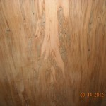 ambrosia maple bookmatch 2