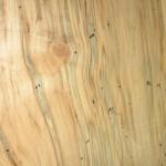 ambrosia maple lumber
